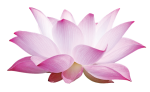 Pink Lotus Alternative Care Inc.